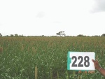 128140228b-rainfed-agriculture-millet.gif
