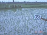 132590351a-irrigated-supplemental-tank-rice.gif