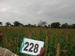 128150228c-rainfed-agriculture-millet.gif
