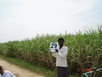 13071029a-irrigated-groundwater-sugarcane-rice-plantation-coconut-banana-double-crop.gif